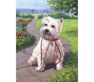 ערכת ציור לילדים - כלב לבן רוצה הליכה