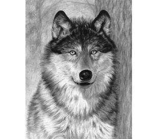 ערכה ללימוד רישום וציור - זאב