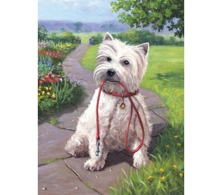 ערכת ציור לילדים - כלב לבן בגינה