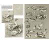חוברת לאונרדו החיות של מטורין מהט 36