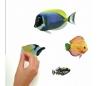 מדבקות קיר דגים טרופים