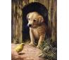 ערכת ציור לילדים - גור כלבים