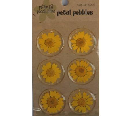 מדבקות פרחים באפוקסי - 6 חרציות צהובות