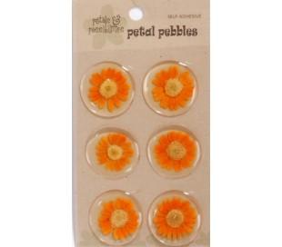 מדבקות פרחים באפוקסי - 6 חרציות כתומות