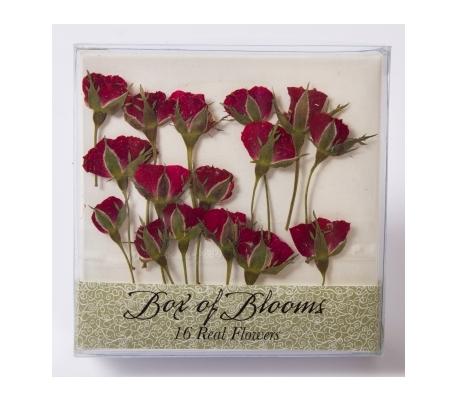 פרחים יבשים -16 ניצני שושנה אדומים